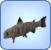 Mummyfish
