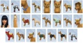 Pets-CAS-Items-6.jpg