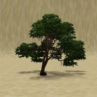 ContentListsCAWtree cypress chinese.jpg
