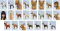 Pets-CAS-Items-6.jpg