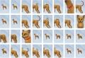 Pets-CAS-Items-1.jpg